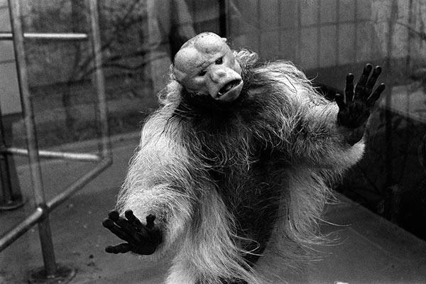 photo Michel Vanden Eeckhoudt singe au zoo derrière une cage en verre