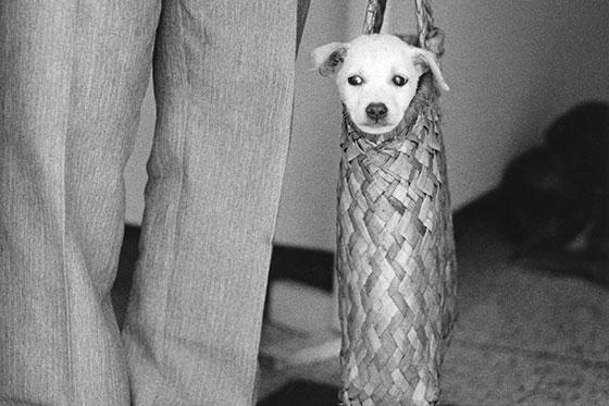 Affiche exposition influences Belges à Beaucouzé, un petit chien dans un panier
