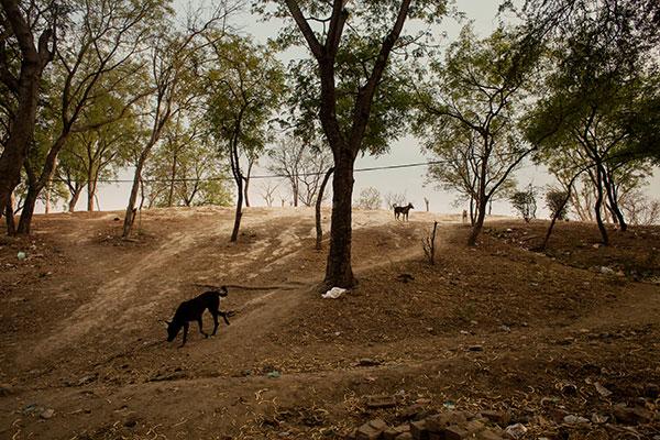 Photographie de Thomas Morel Fort de chiens dans un terrain vague dans le cadre du festival Photographique Influences indiennes à Beaucouzé