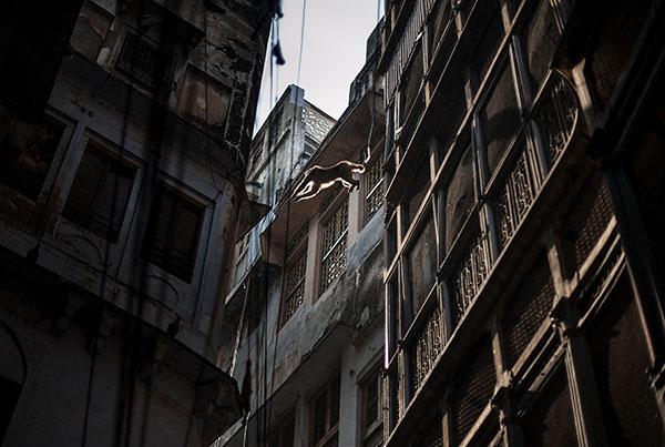 Photo de Tilby Vattard d'un singe sautant entre deux immeubles en Inde dans le cadre du festival Photographique Influences indiennes à Beaucouzé