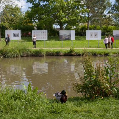 un canard devant le lac du Couzé à Beaucouzé pendant le Festicval Photographique Influences IBelges